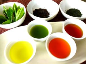 日本茶こども講座 自由研究にぴったり!