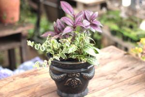 親子でガーデニング ミニ観葉植物の寄せ植え作り